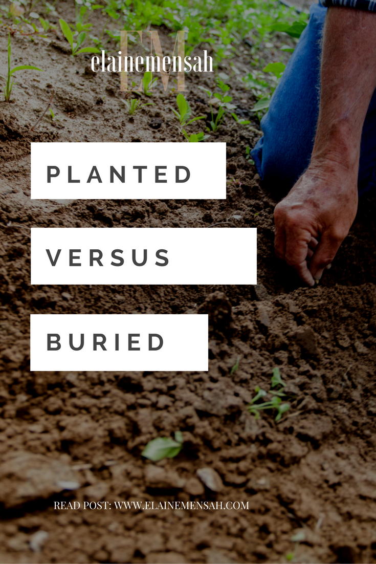 Planted versus Buried: A reflection on life, family, business, career, and the things that are important.